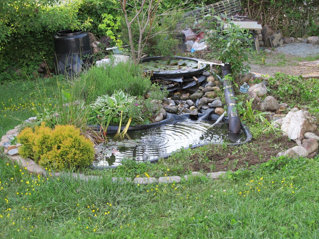 fish for outdoor ponds in brisbane outdoor designs